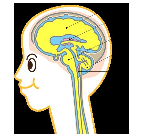 脳脊髄液(CSF)が正常に循環していると…