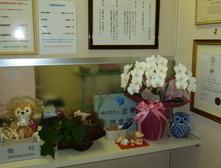 患者さまより、綺麗なお花をいただきました。